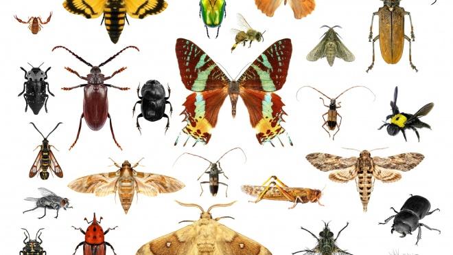 TSS 2019 sugere para Ferreira do Alentejo uma manhã dedicada aos insetos
