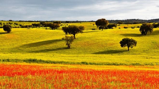 """IPBeja inaugura hoje mostra """"Sobre a flora do Baixo Alentejo"""""""