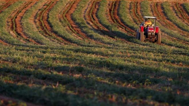 CAP disponibiliza linha telefónica de apoio aos agricultores