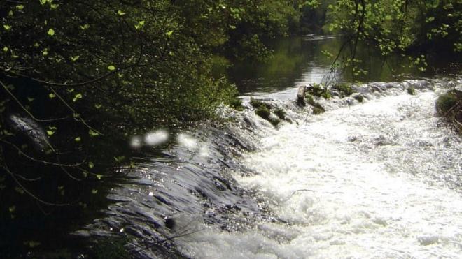 EDIA mostra o maior bosque ripícola do país