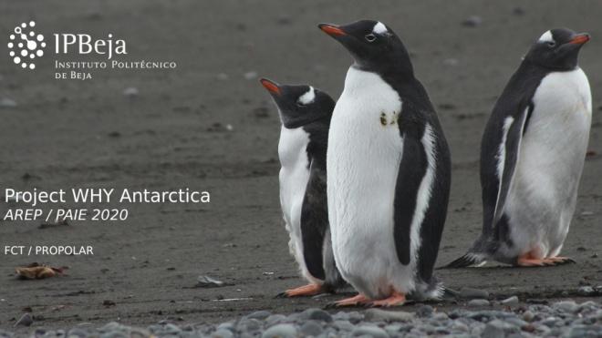 IPBeja na Antártida pela terceira vez consecutiva