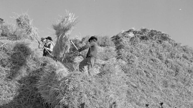 """Vidigueira: Exposição """"Os Campos do Baixo Alentejo da década de 1950"""""""