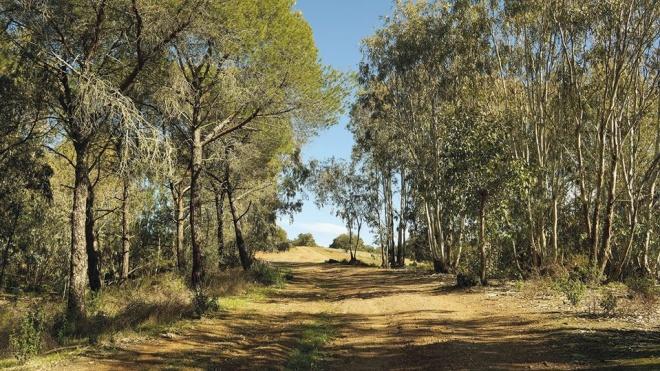 Beja: aprovada candidatura do município ao Fundo Florestal Permanente