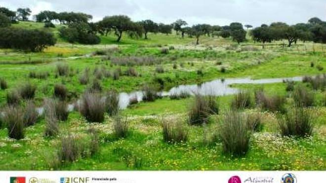 Câmara de Aljustrel: aprovado funcionamento Gabinete Técnico Florestal