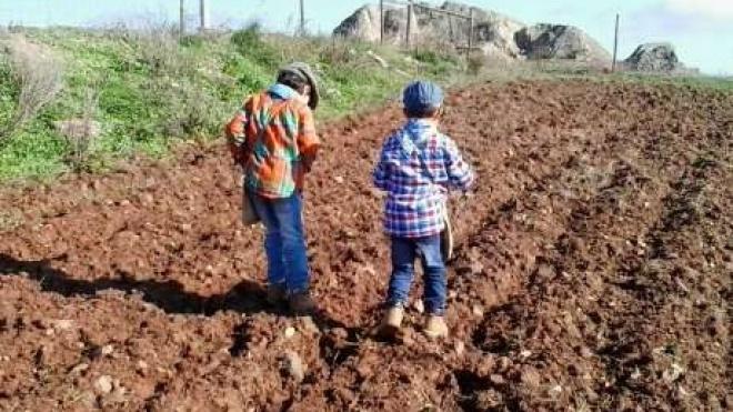 Aljustrel: ciclo do pão leva crianças ao Museu da Ruralidade