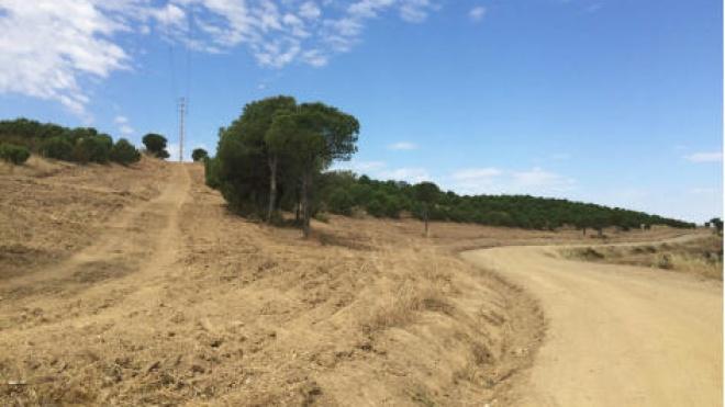 Fundo Florestal Permanente de Mértola aprovado
