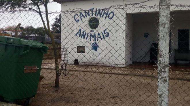 PSD de Beja preocupado com o Cantinho dos Animais