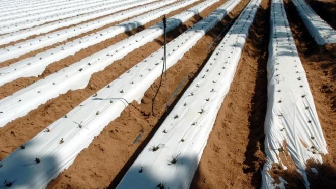 """Sudoeste Alentejano """"exige debate sério sobre avanço da agricultura intensiva"""""""