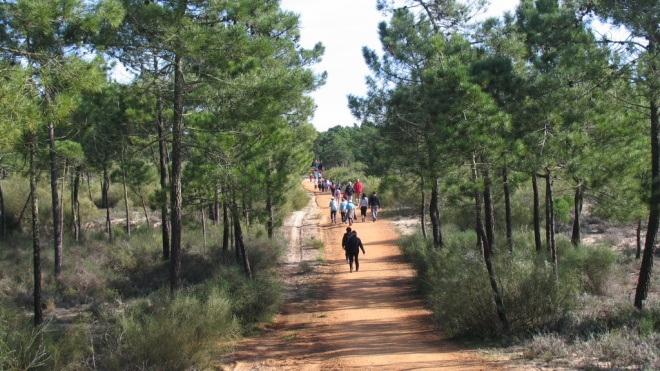 ADPM: Mata de Vila Real de Santo António candidata-se a Área INHERITURA