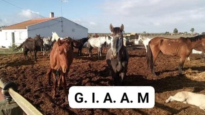 """GIAAM Alentejo apela à ajuda """"ao resgate de animais maltratados"""""""