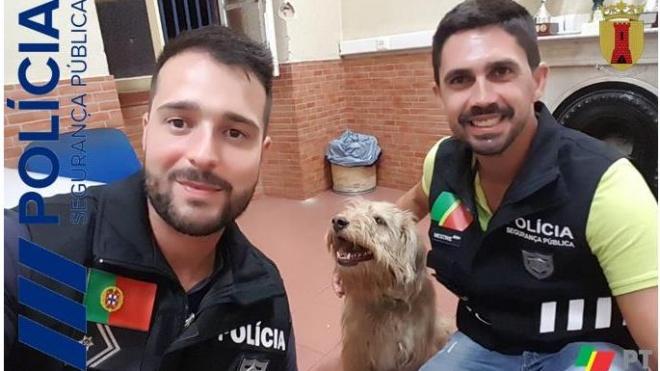 PSP de Beja devolve cão perdido à sua família