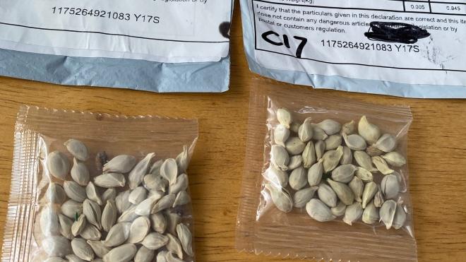 Agricultura: Ministério alerta para entrega de sementes não solicitadas por correio