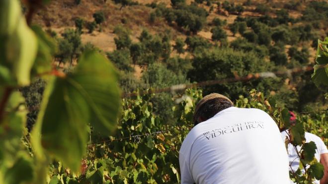 """Adega Cooperativa com """"expetativas elevadas de bons vinhos para o futuro"""""""