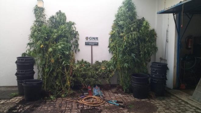 Odemira: 2 detidos por tráfico de estupefacientes