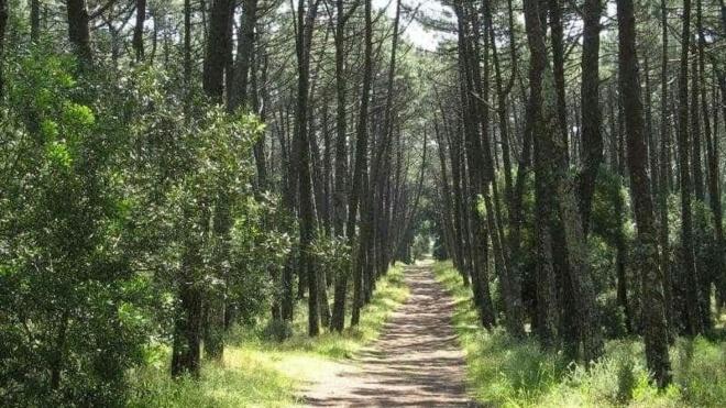 PE quer estratégia ambiciosa para as florestas no período pós-2020