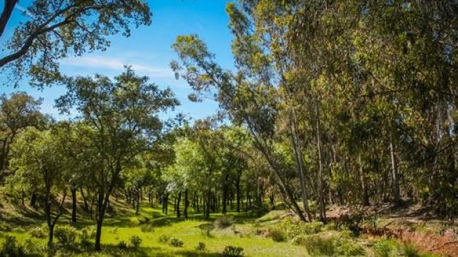 Beja: Candidatura ao Fundo Florestal Permanente foi aprovada