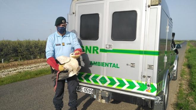 GNR Beja: Resgate de cegonha branca em Ferreira do Alentejo