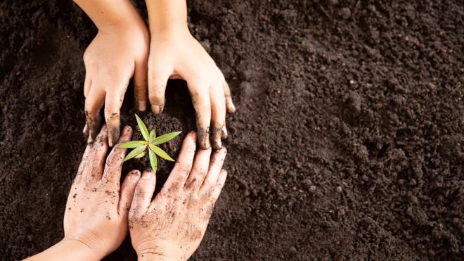 """CNA: """"Agricultura familiar, um setor resiliente sem um euro para recuperar"""""""