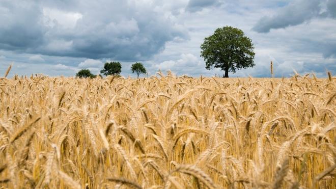 Ministra da Agricultura exaltou papel do setor agrícola em situação de pandemia