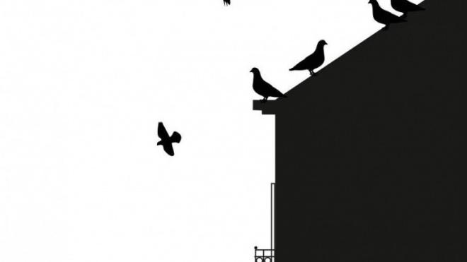 """Moura debate """"Pombos urbanos, um problema de todos"""""""