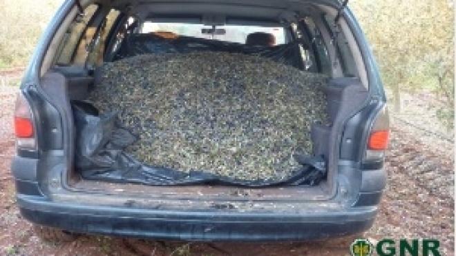 GNR de Beja deteve 1 indivíduo por furto de azeitona