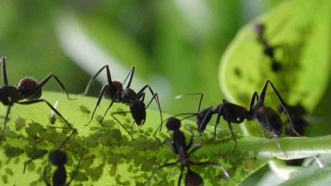 Descobertas duas espécies de formigas no Baixo Alentejo