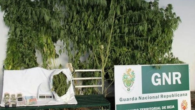 GNR deteve individuo por tráfico de droga
