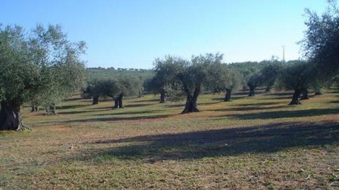 Jornada de trabalho sobre olival tradicional
