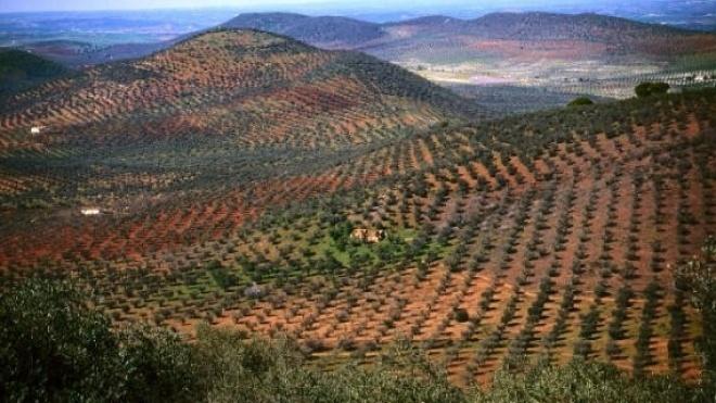 Terras sem Sombra 2014 salvaguarda biodiversidade em Moura