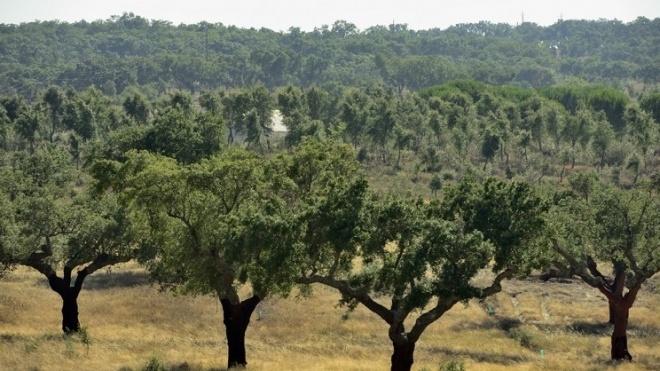 """ADPM """"convida"""" agricultores a regenerar o montado alentejano"""