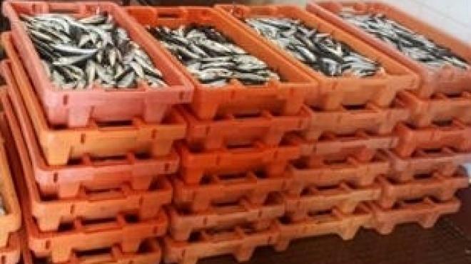"""Cabaz do Mar com peixe \""""fresquinho\"""" para o consumidor"""