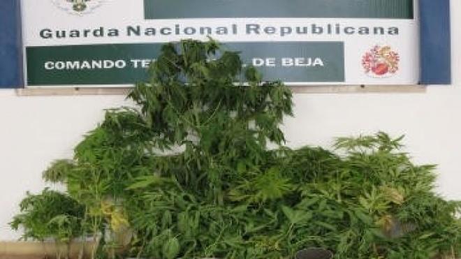 Detenção e apreensão de droga em Odemira