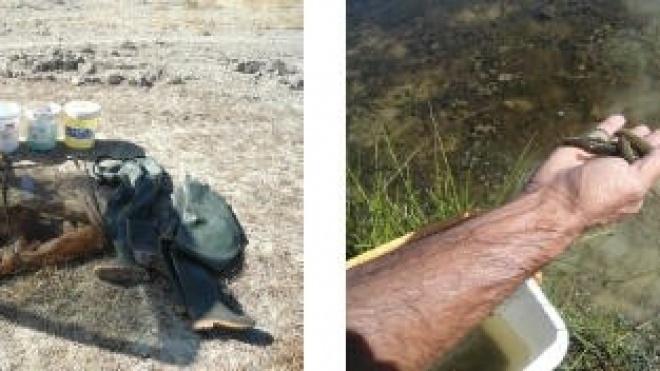 Detenções por pesca ilegal