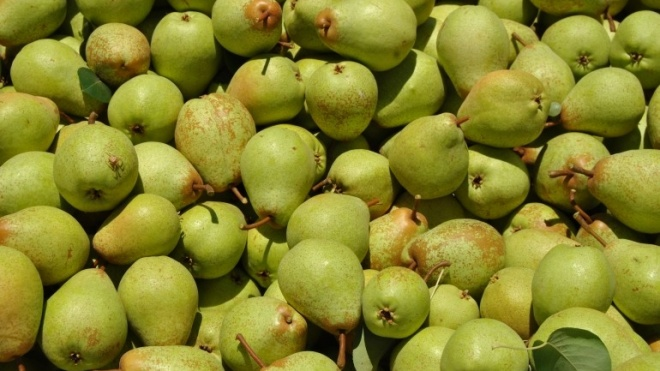 Centro de Frutologia Compal seleciona empresários frutícolas