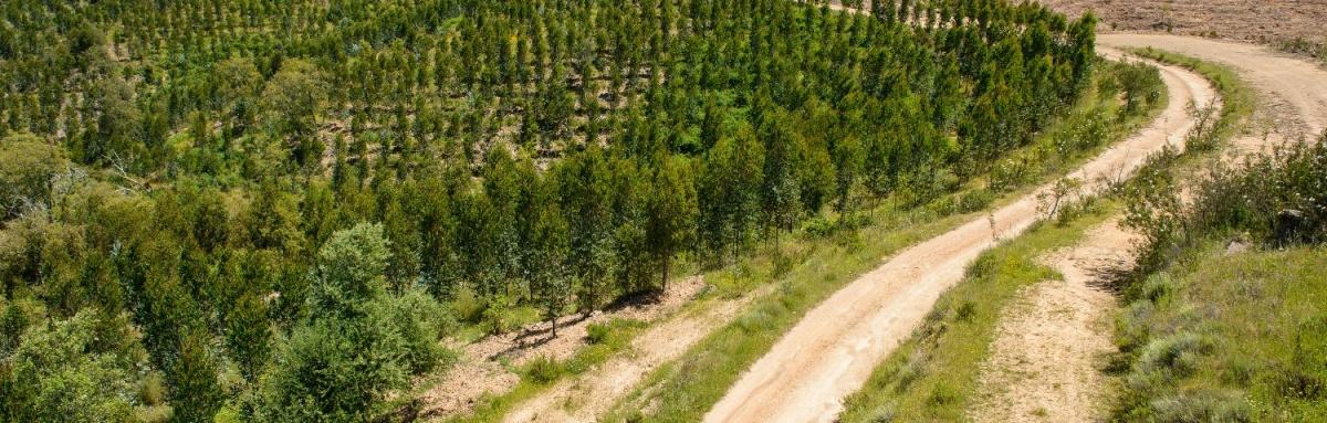 """CAP acusa Governo de aprovar legislação à """"revelia"""" do sector florestal"""