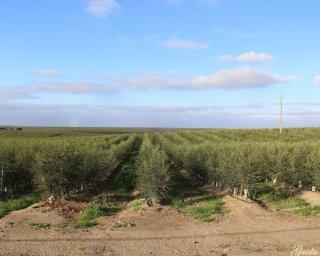 Serpa: Município reitera medidas de monitorização nas monoculturas