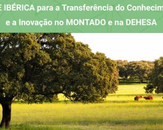 Rede Ibérica debate gestão do montado