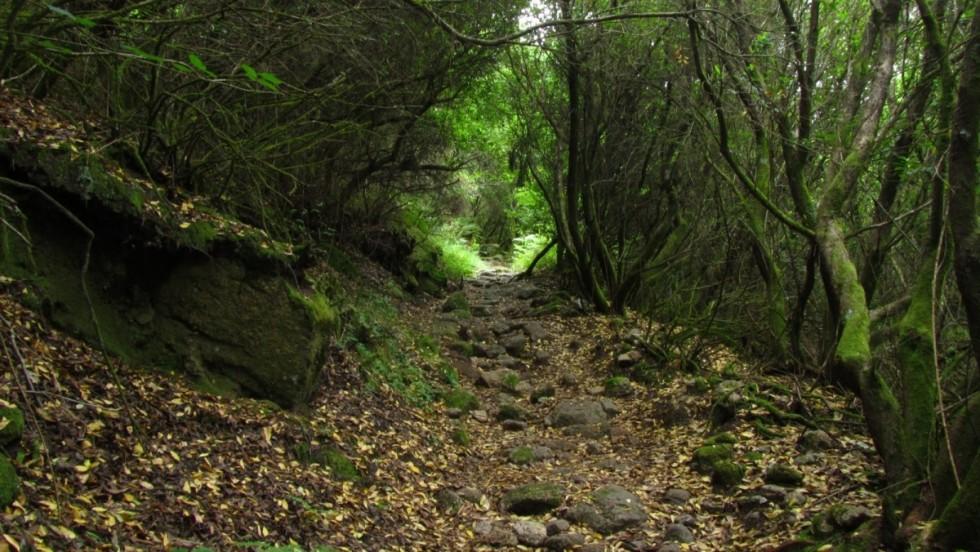 Defesa da Floresta