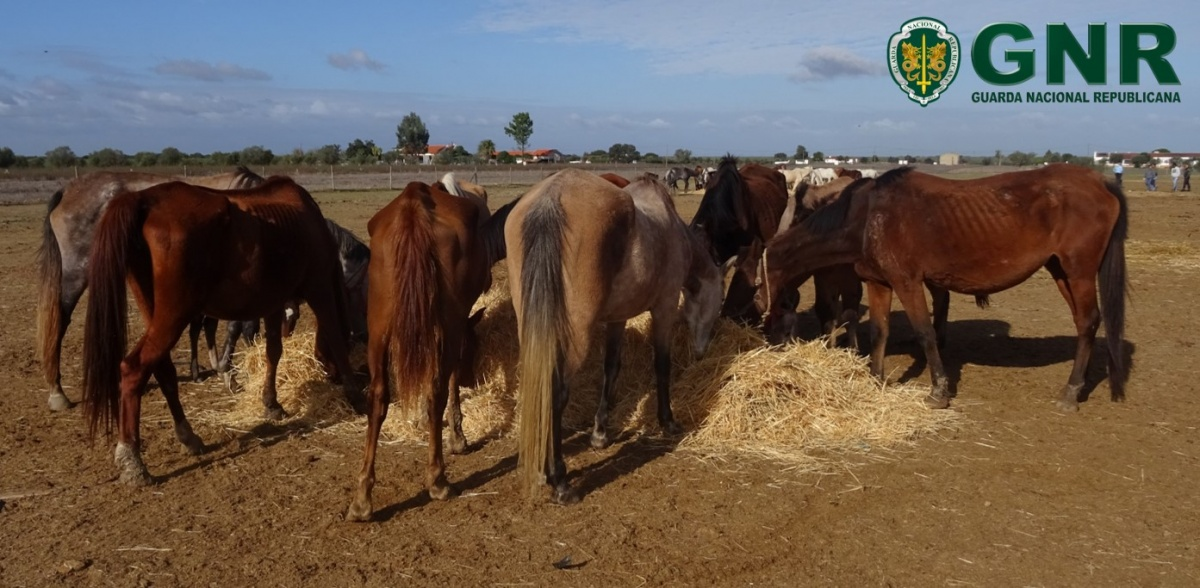 cavalos apreendidos