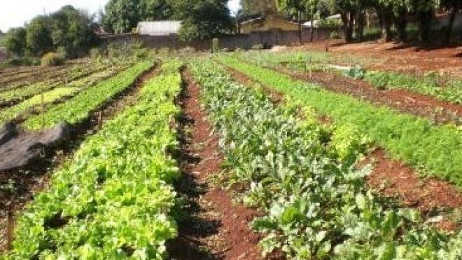2014 é o Ano Internacional da Agricultura Familiar