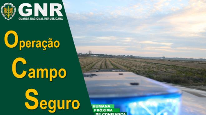 Operação Campo Seguro com 8,5 toneladas de azeitona apreendida