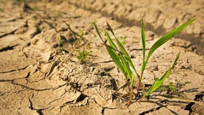 DRA do PCP preocupada com a seca e o impacto na região