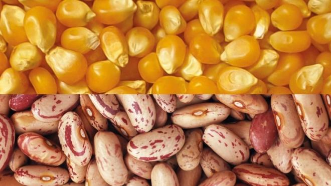 São Teotónio recebe 4º Festival do Milho e do Feijão
