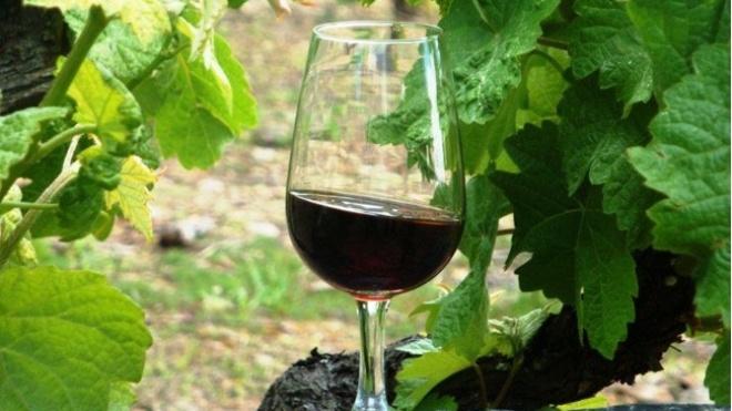 Vidigueira brinda visitantes com festa do vinho e da vinha