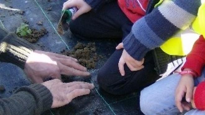Crianças de Aljustrel convidadas a criar jardim de plantas aromáticas