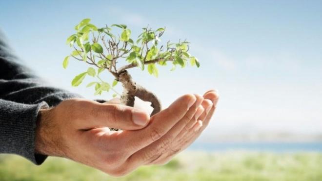 Dia Mundial da Árvore e da Floresta celebrado em Beja e Aljustrel