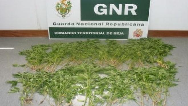 Detenção e apreensão de droga no concelho de Ferreira do Alentejo