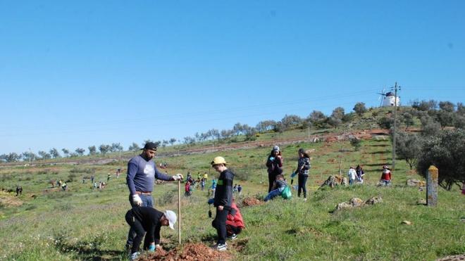 Município de Aljustrel vai plantar mais de 2 mil árvores