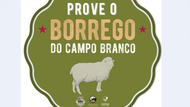 Promoção e Comercialização da Carne de Borrego do Campo Branco