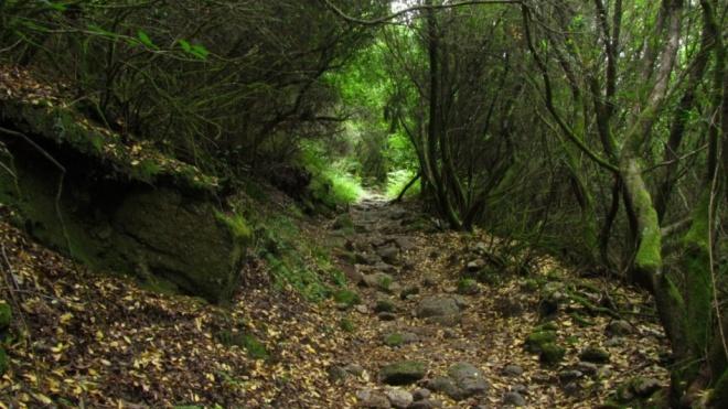 "Ourique: Peça de Teatro ""A Defesa da Floresta"""